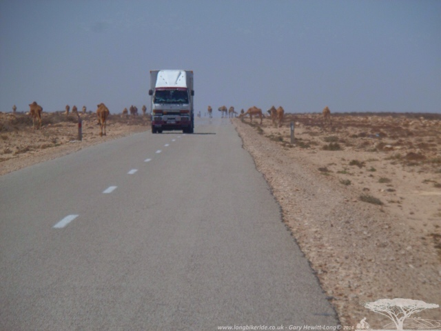 Camels and lorries
