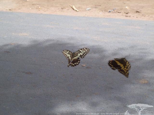 Er... Big butterflies
