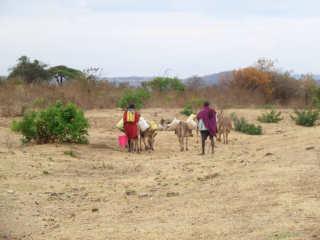 Donkeys Being Used To Fetch Water