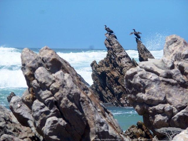 Cormorants drying off in Kleinmonde