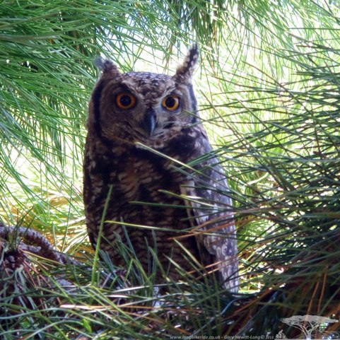 What you looking at.. twit..twoo
