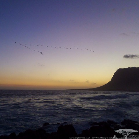 Cormorants flying home to roost